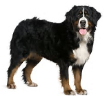 Large dog breeds list with photos